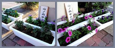 山ノ内町-kids-中学校から花をいただきました。