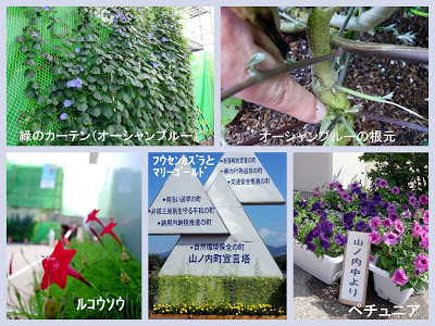 山ノ内町-yamanouchi-炎天下に咲く花たち