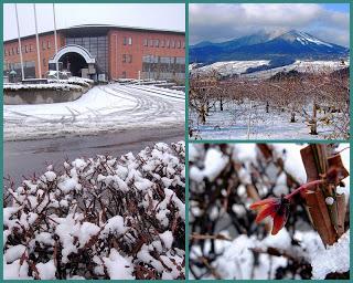 -scenery-里にも積雪がありました。