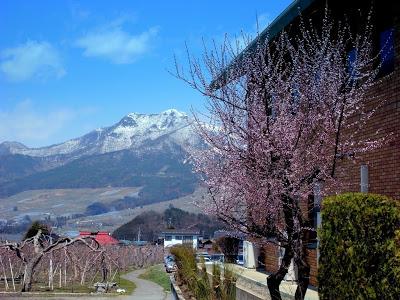 山ノ内町-yamanouchi-山ノ内町にも花の便り
