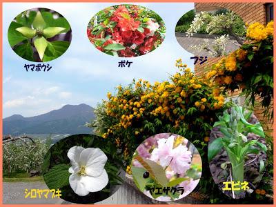 山ノ内町-library-蟻川図書館の庭に咲く花