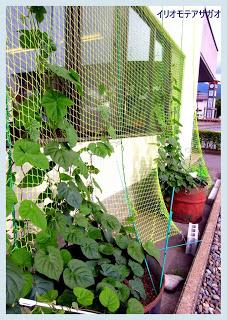 山ノ内町-yamanouchi-電力節約 緑のカーテン