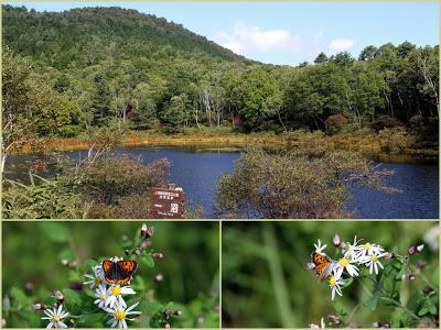 -scenery-志賀高原「一沼」の紅葉はもう少し