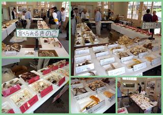 -scenery, event-楓の館で「きのこ展示会」が行われました