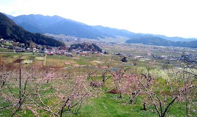 -event-県内外から賑わった「古代桜まつり」