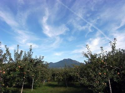 -loco, farm-山ノ内町は収穫の秋、そして秋祭り