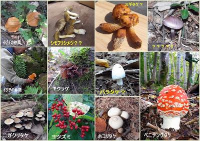 -kominkan-山ノ内町きのこ研究会の標本採取に同行しました