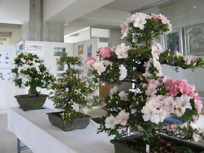 -kominkan-今年も「サツキの盆栽」が届きました。