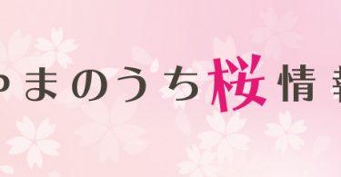 桜--山ノ内町開花情報