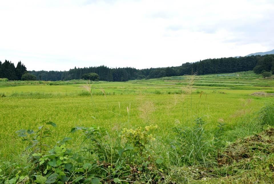 山ノ内町須賀川, ユネスコエコパーク-scenery-バイカモ(梅花藻)が満開です
