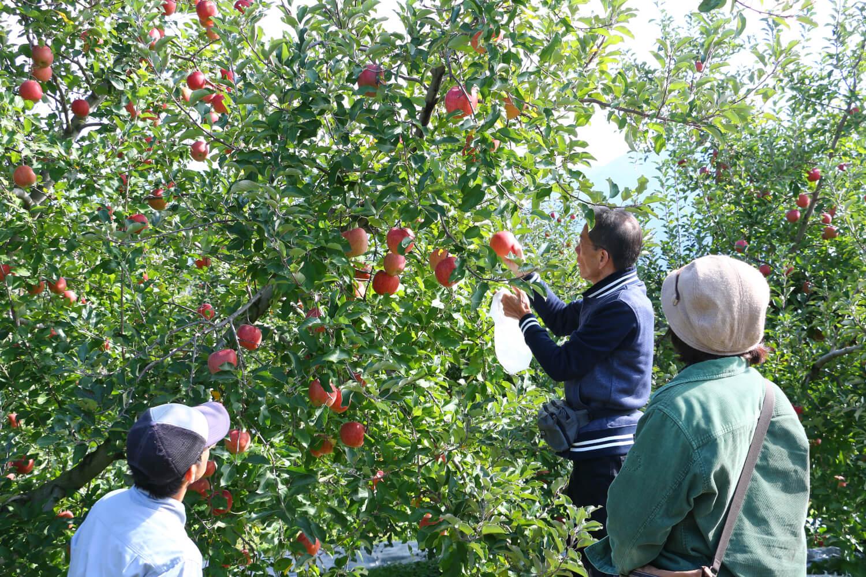 ブルーベリー, りんご, ぶどう, さくらんぼ, これからのイベント, pickup-agri, eventpr-山ノ内町でくだもの狩り