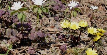 花, ユネスコエコパーク-scenery-里山の春を待つ