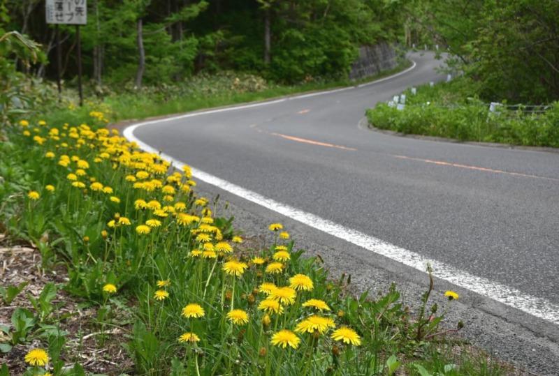 山ノ内町ユネスコエコパーク-mt-志賀高原 遊歩道と車道沿いの植物