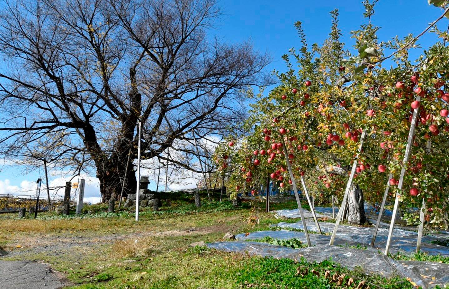 山ノ内町ユネスコエコパーク-localwork-先生方のESD研修