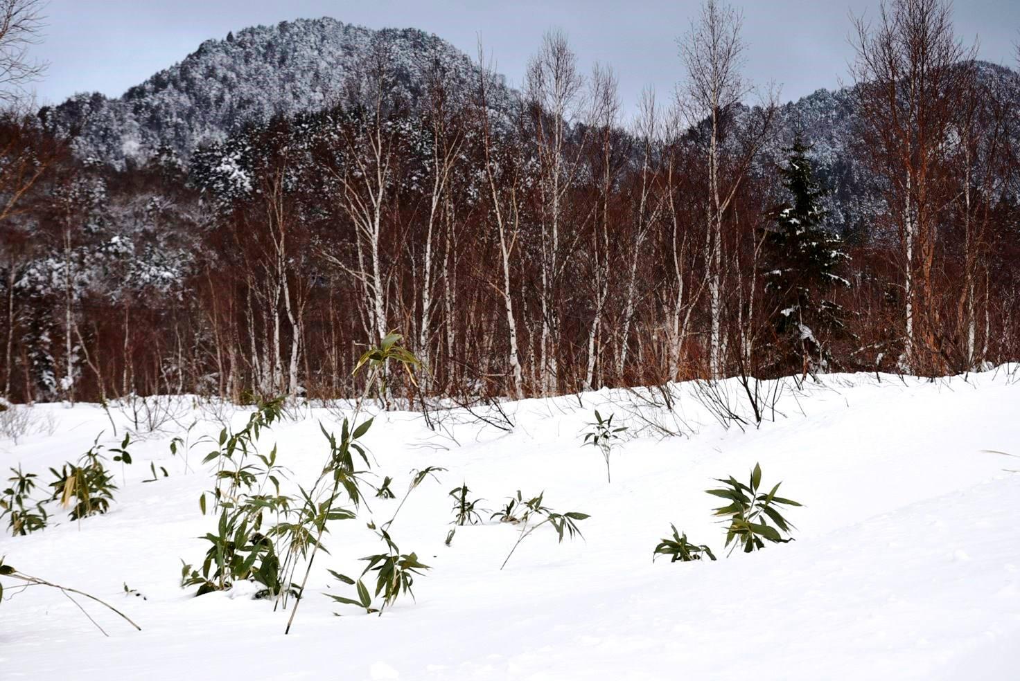 山ノ内町山の様子-mt-高原の冬