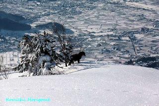 山ノ内町-yamanouchi-快晴の高社山から、そしてリンゴ畑から