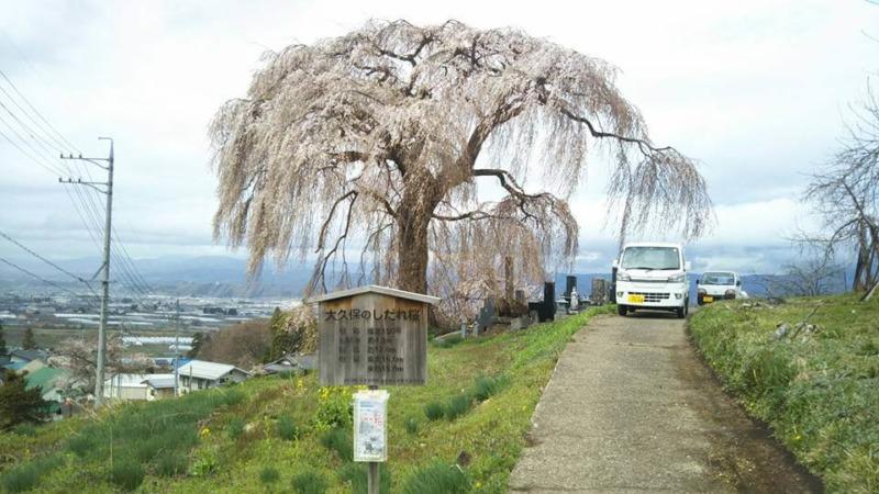 山ノ内町桜-flower-info-大久保のしだれ桜