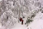 志賀高原, ユネスコエコパーク-scenery, column-冬の志賀高原 自然探勝コース