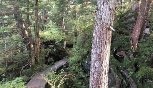 志賀高原でトレッキング 「まが玉の丘」を歩いてきました